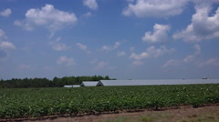 Driving by a cotton field on hot mid-summer day. Stock Footage