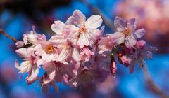 blossom tree flowering - stock photo