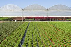 nursery with greenhouses . - stock photo