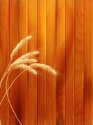 Stock Illustration of Wheat spikes on wooden board. EPS 10