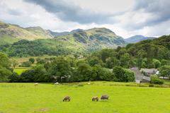Country scene Seatoller Borrowdale Valley Lake District Cumbria England UK - stock photo
