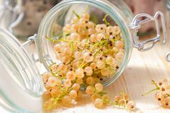 Fresh fruits white currants jars preparations Stock Photos
