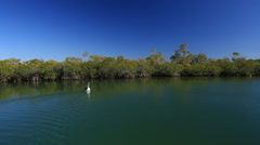 Wide shot of Pelican swimming in river Stock Footage