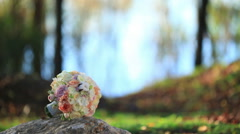 Bridal bouquet shot in the woods Stock Footage