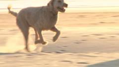 Dog Running on Sandy Beach Stock Footage