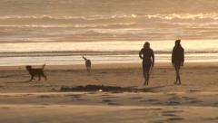 Girls and Dogs Play Fetch at Beach Stock Footage