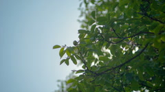 Green leaves freshness at spring season and sun on blue sky Stock Footage