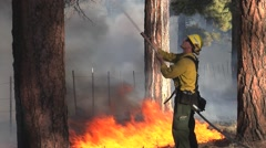 Firefighter controlling fire in tree with hose Stock Footage