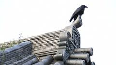 Crow at Ueno Park, Tokyo, Japan Stock Footage