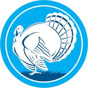 wild turkey side view circle retro - stock illustration