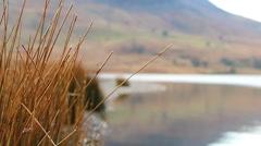Pull Focus Reeds to Beautiful Lake Bokeh - English Countryside Stock Footage