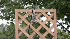 Bird on a backyard feeder Stock Footage