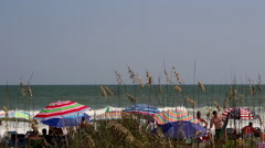 Beach umbrellas sea grass crowds seagulls Stock Footage