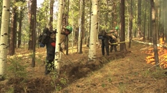 Firefighters digging fireline with pulaski Stock Footage