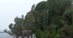 Palm Trees Blow In Wind As Hurricane Nears - stock footage