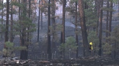 Firefighter dropping tree with chain saw - stock footage