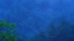 Raindrops on the spider web. Stock Footage