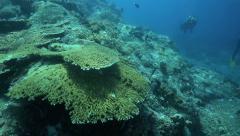 Scuba divers exploring coral reef ecosystem Stock Footage