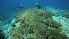 Scuba divers exploring coral reef ecosystem in Komodo National Park, Indonesia Stock Footage