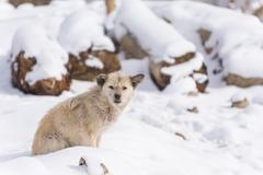 dirty dog in winter snow fall - stock photo