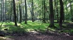 4k Zoom in sunny summer forest with Red Deers horde Stock Footage