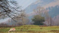 Sheep in field, Medium Picturesque view of Lake District English Countside Stock Footage