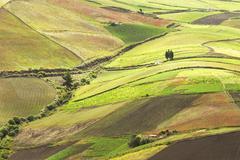 High Altitude Farming In Ecuadorian Andes About 4000M Altitude - stock photo