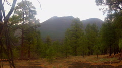 Rainy Day In Forest- Sunset Crater National Monument Stock Footage