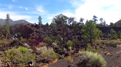 Trees Growing In Lava Field- Sunset Crater National Monument Stock Footage