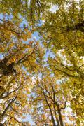 Autumn in the treetops Stock Photos