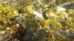 Underwater landscape with fish and light rays sun. Stock Footage