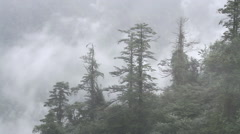 Beautiful view of Mount Emei at daytime, the mist in the forest Stock Footage