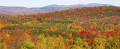 panorama of autumn forest, sutton, quebec, canada - stock photo
