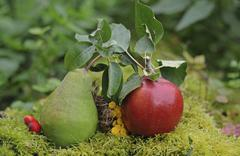 pear and apple, autumnal still life - stock photo