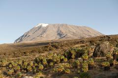 Kibo peak, extinct volcano, forest of giant groundsel (dendrosenecio kilimanj Stock Photos