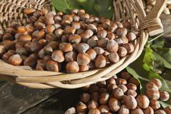 Wicker basket with hazelnuts (corylus avellana) Stock Photos