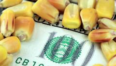 Commodity Trading US Currency One Hundred Dollar Bill with Yellow Corn - stock footage