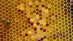 Close-up view of bees on honeycomb Stock Footage