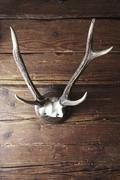 Old antlers hanging on a rustic wooden wall Stock Photos