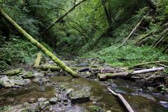 deadwood in the gauchachschlucht gorge, a side gorge of the wutachschlucht na - stock photo