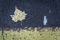 Leaf and road markings, brixton, london, england, united kingdom, europe Kuvituskuvat