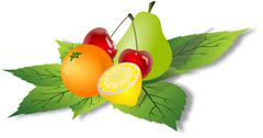 Simple fruits on green leafs Stock Illustration