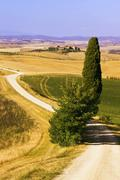 typical tuscan landscape with a cypress (cupressus), near ville de corsano, t - stock photo