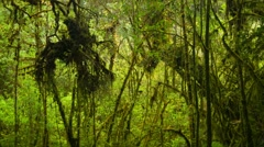 thickets usual rainforest. high mountain thailand - stock footage