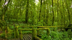 Moss-covered trees in a park near chiang mai Stock Footage