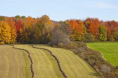 hayfield being harvested in autumn, abercorn, quebec, canada - stock photo