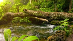 Stream in tropical forest among the snags. thailand Stock Footage