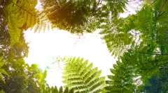 Ferns in the rainforest. view from the bottom up Stock Footage
