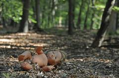 Naked doll in the woods, symbolic image for child abuse, kidnapping Stock Photos