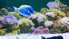 Marine fish in the beautiful underwater scenery in the aquarium Stock Footage